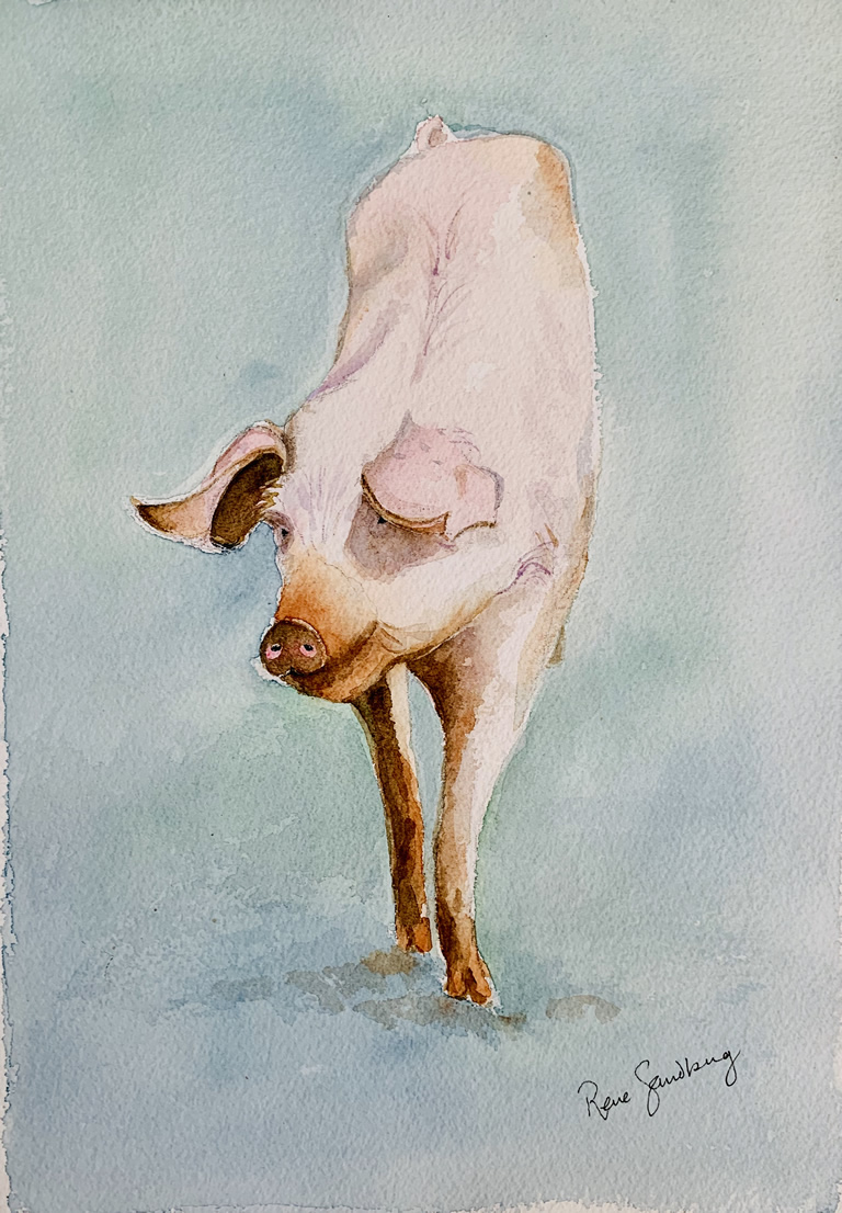 Pig 1 Watercolour Painting by Rene Sandberg