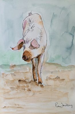 Pig 2 Watercolour Painting by Rene Sandberg